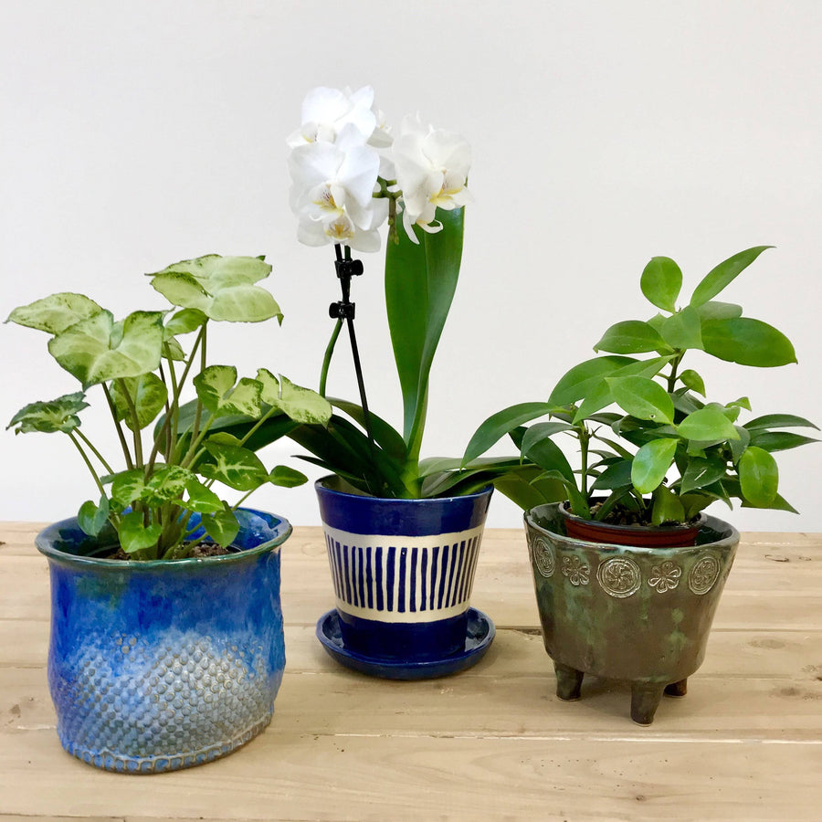 Three Planters Workshop (8 & 15 November)