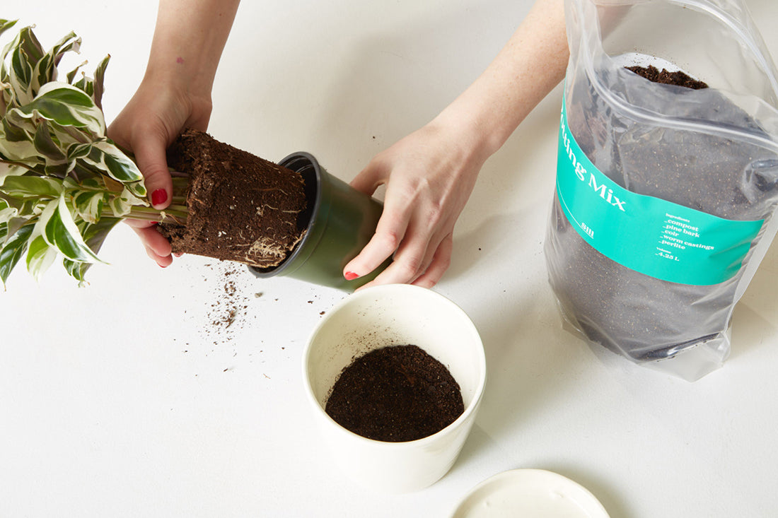 How-To: Pick a Planter for Your Plant
