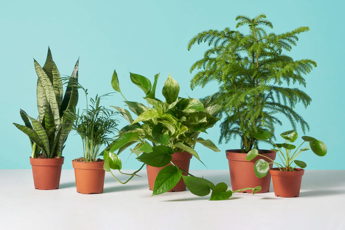 Our Top Low-Maintance Houseplants for Under $20