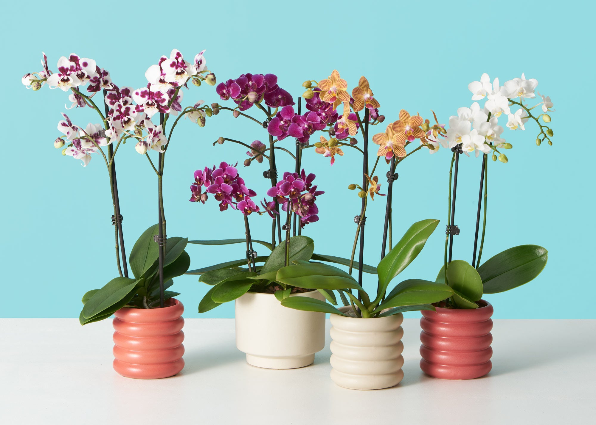 How To Make Your Orchid Rebloom The Sill