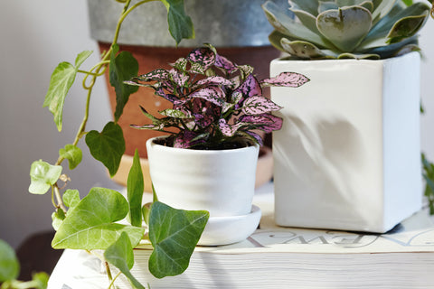 Spring Plant Care | Seasonal Plant Care Tips – The Sill on
