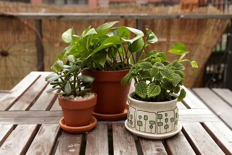 Inside, Out: How-To Bring Indoor Plants Outdoors