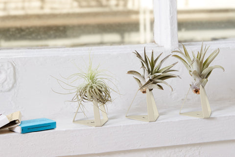 Plants 101: Epiphytes and Air Plants