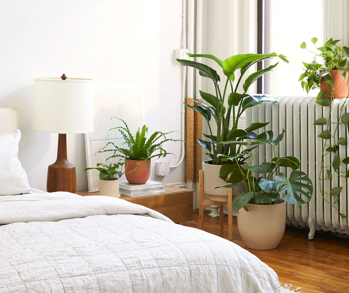How to Bring Your Plants Indoors for the Fall and Winter