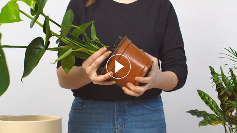 How to Repot Your Plant | Plant Care Tips – The Sill