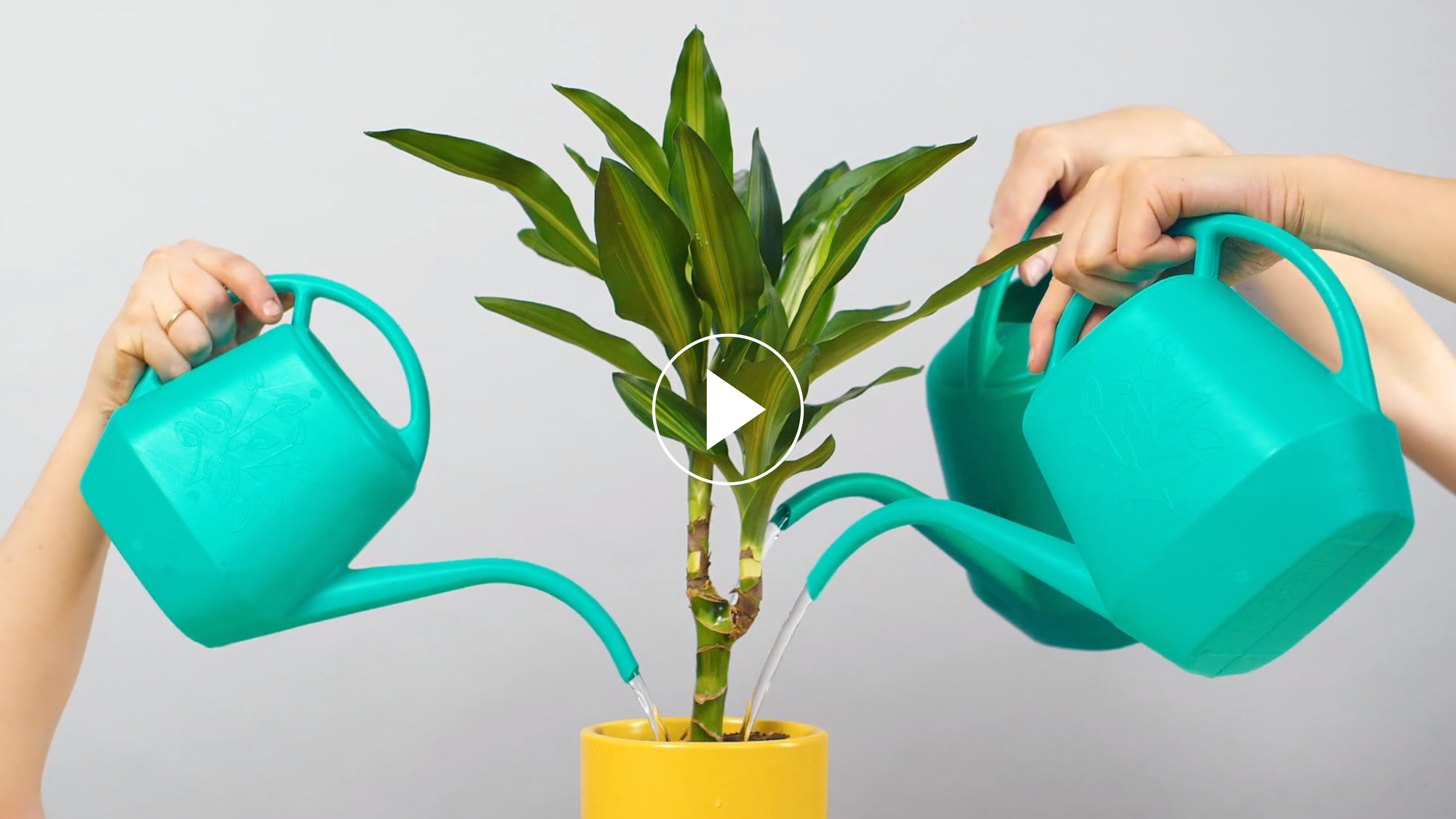 How To Water Your Plants Plant Care Tips The Sill