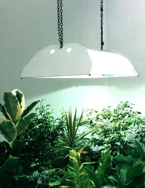 Understanding Lighting in Your Home and How It Affects Your Plants