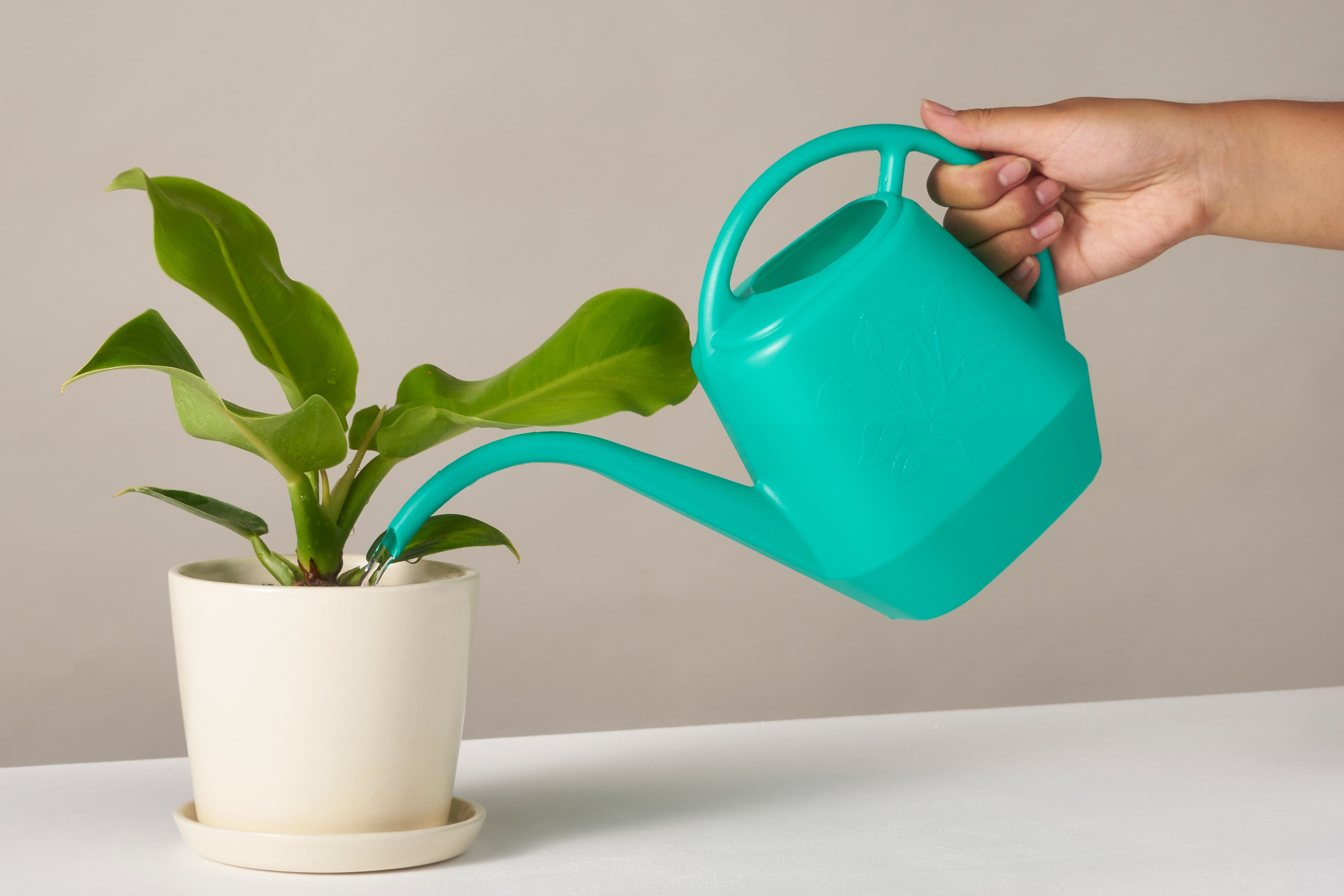 house plant turquoise watering can