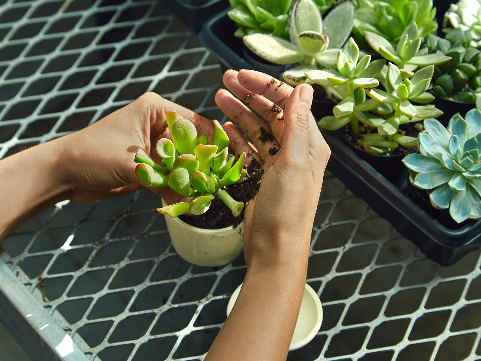 The Sill | Indoor Potted Plants Delivered | Special Offer
