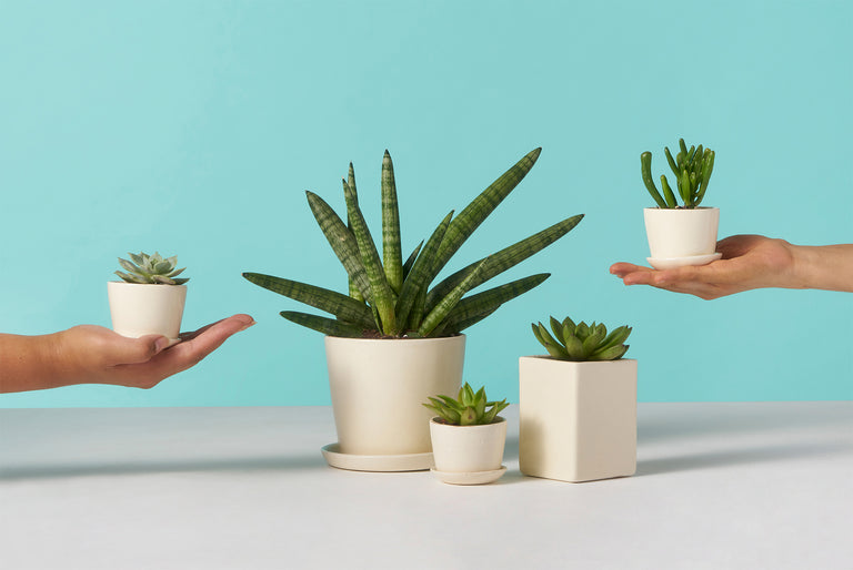 Perfectly potted plants