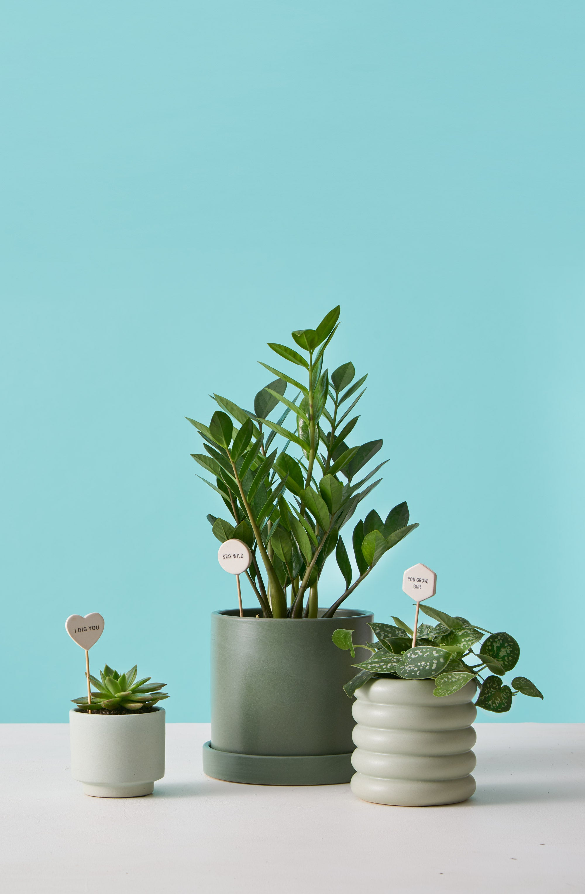 Indoor Potted Plants Delivered to Your Door – The Sill on simple tiny houses, sizes of tiny houses, views of tiny houses, examples of tiny houses, earth tiny houses, home tiny houses, types of big houses, manufacturers of tiny houses, some tiny houses, styles of tiny houses, models of tiny houses, dimensions of tiny houses, benefits of tiny houses, multiple tiny houses, costs of tiny houses,