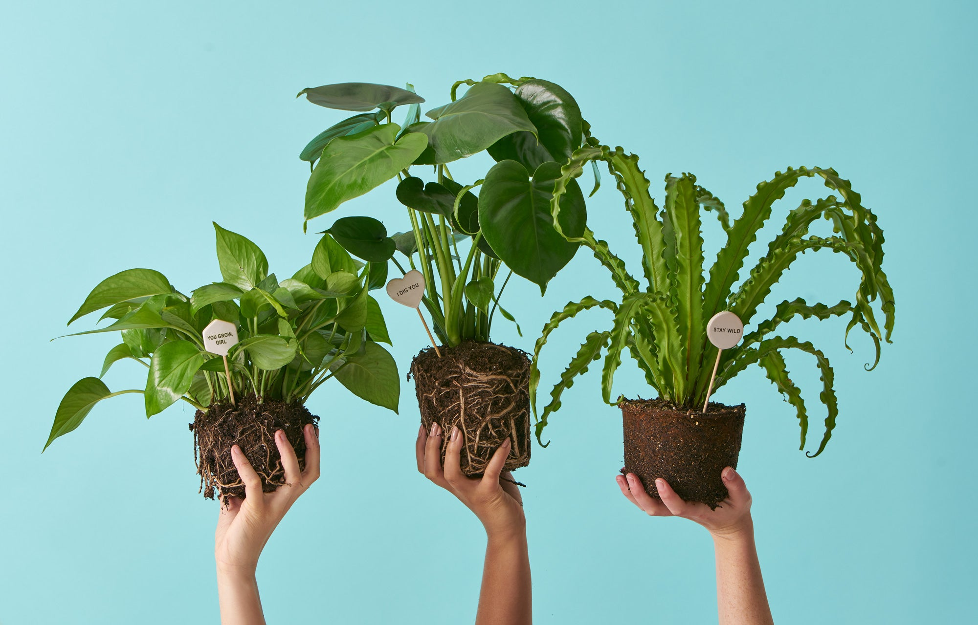 indoor potted plants delivered to your door the sill. Black Bedroom Furniture Sets. Home Design Ideas