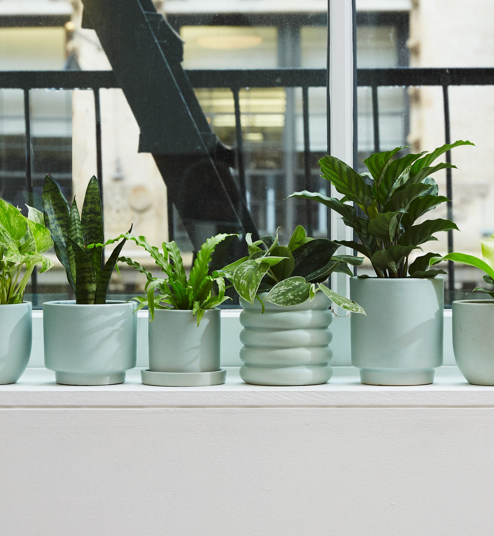 dfb9c226 Indoor Potted Plants Delivered to Your Door – The Sill