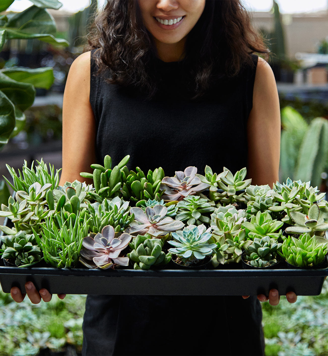 Person Holding Tray of Succulents