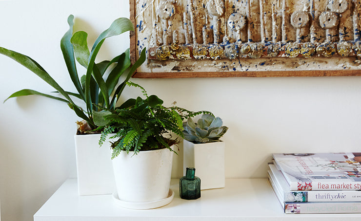 The Sill houseplants: Olmsted with Staghorn Fern, August with Fern, Calvert with Succulent