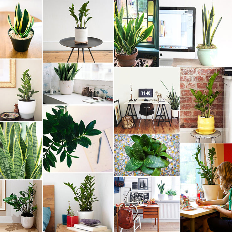 treat yourself our favorite desk plants the sill