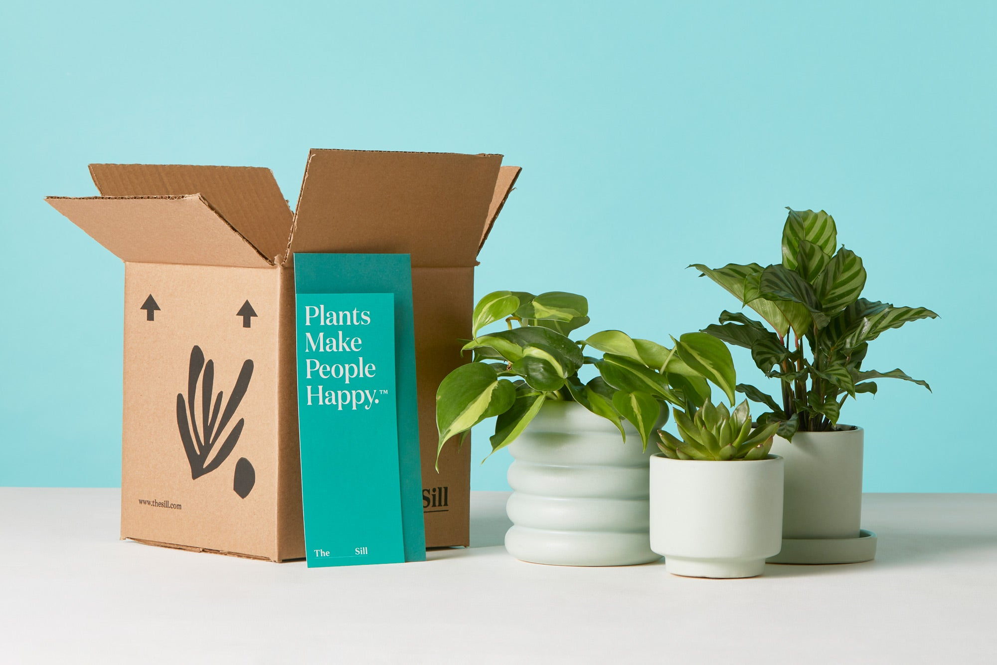 The Sill | Houseplants for Delivery | Special Offer