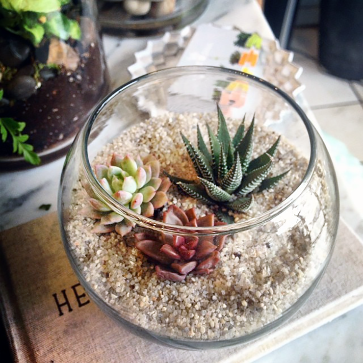 How To Make A Terrarium Plant Care And Diy Tips The Sill