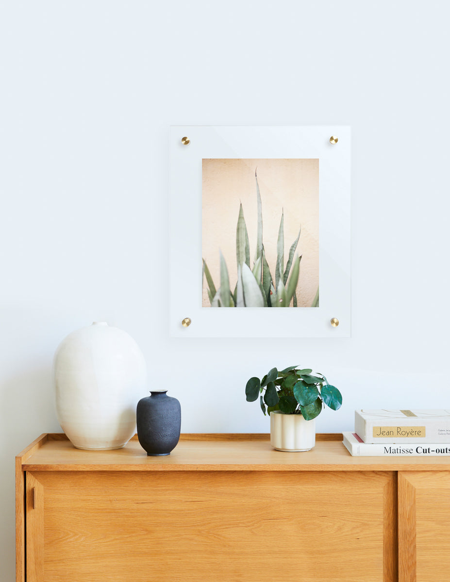faux pilea and floating frame
