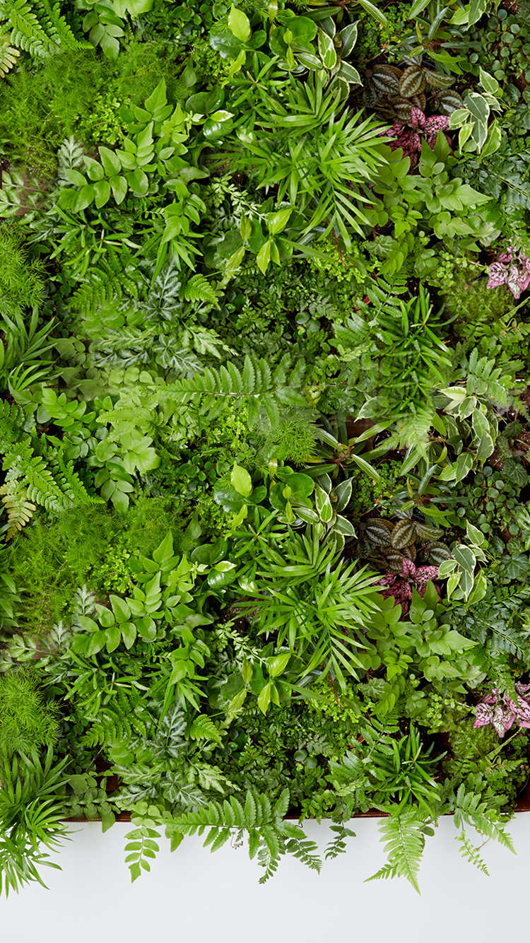 The Sill - So many leafy ferns iPhone Wallpaper Gift