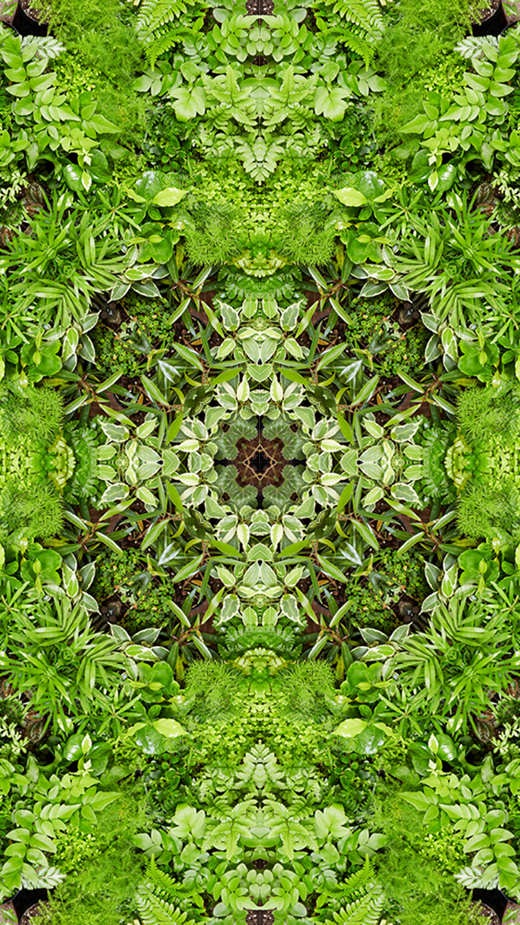 Leafy Terrarium Fern iPhone Wallpaper Gift