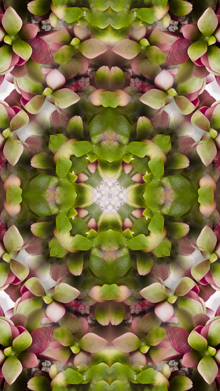 Mirrored colorful succulent iPhone Wallpaper Gift