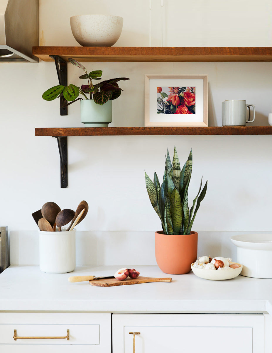 kitchen shelves with plants