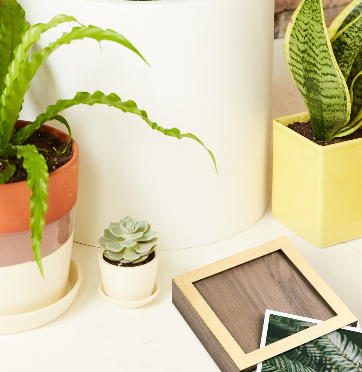 plants with photo box