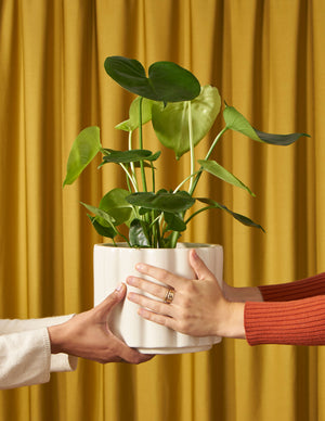 Gold drape monstera hands