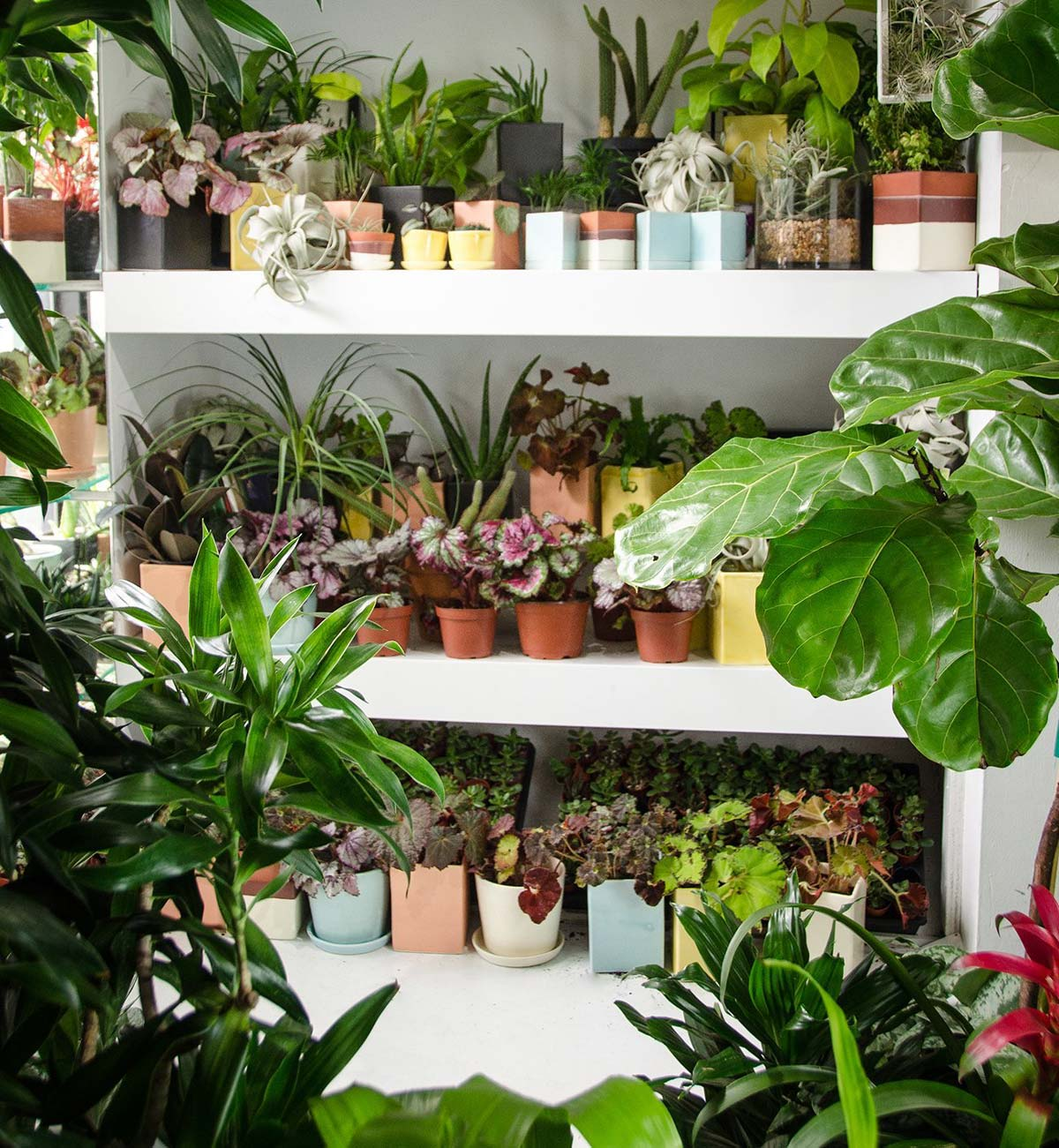 Plants on Shelf in a Retail Shop