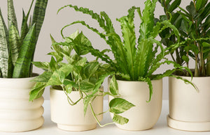Live plants cream mobile 12429857 5845 4914 b9b0 ae043ff948d1