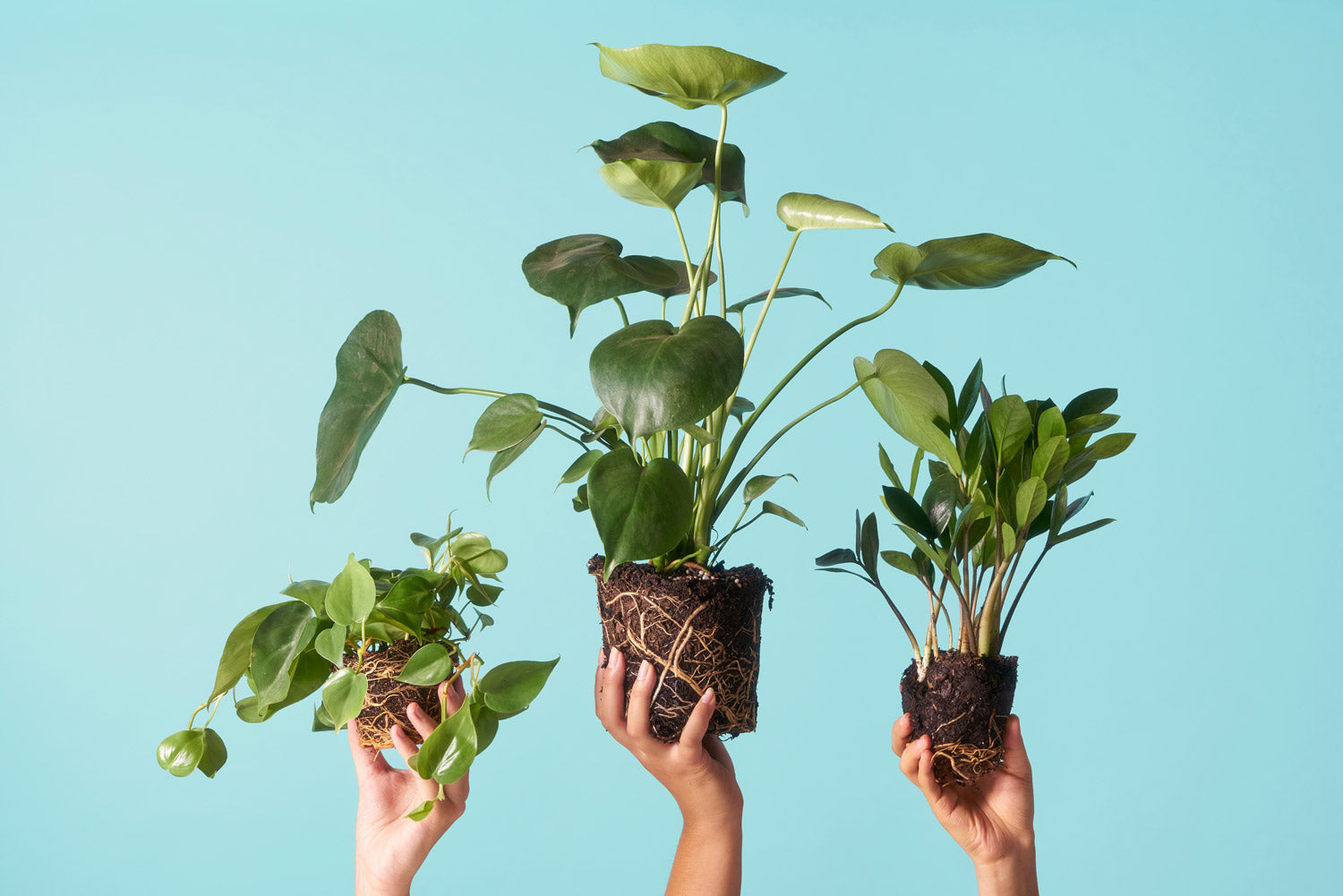 Three Hands Holding Up Plants