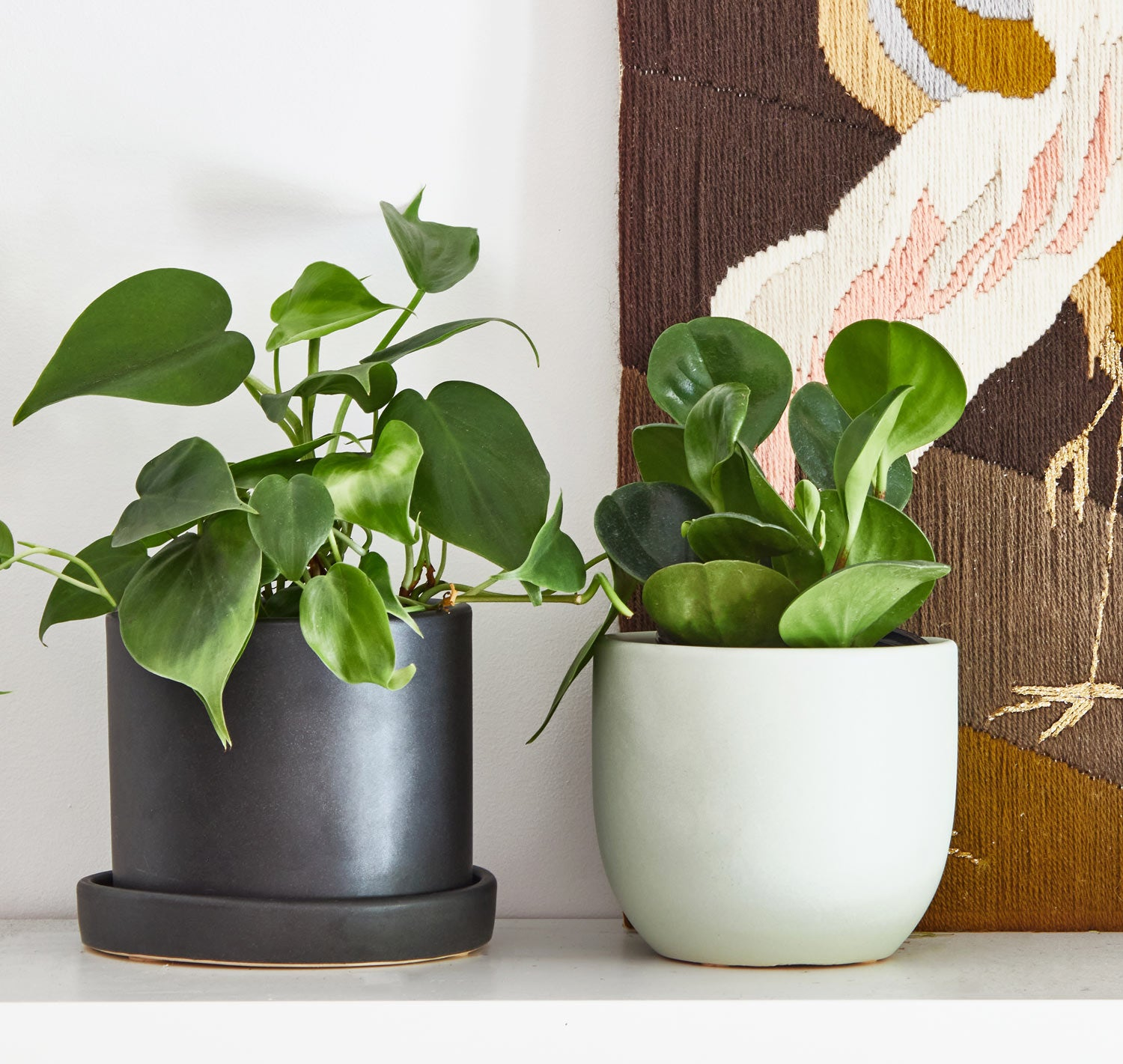 Philo peperomia on shelf 32b72384 eaff 403c a208 a901a2cb338e