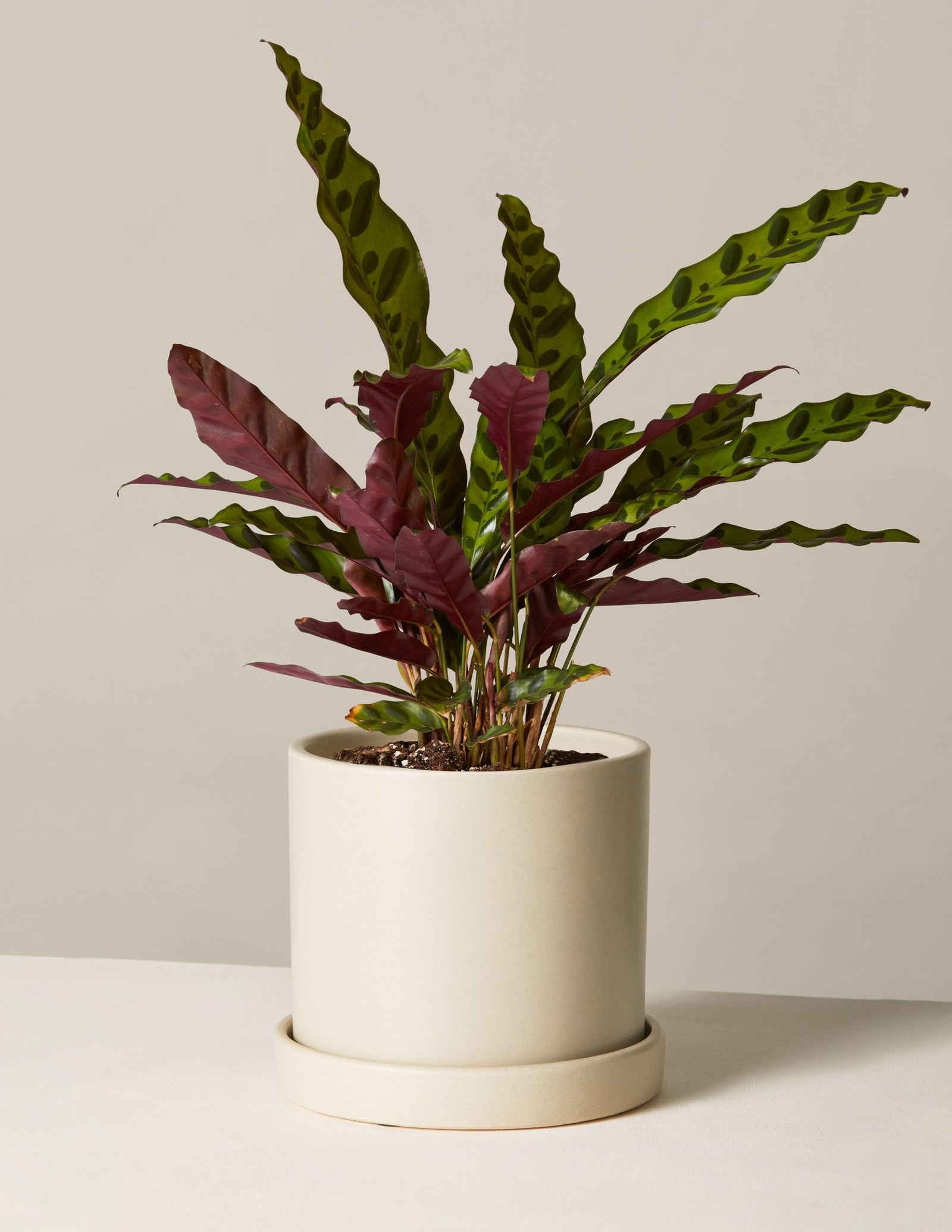 Indoor Potted Plants Delivered To Your Door The Sill