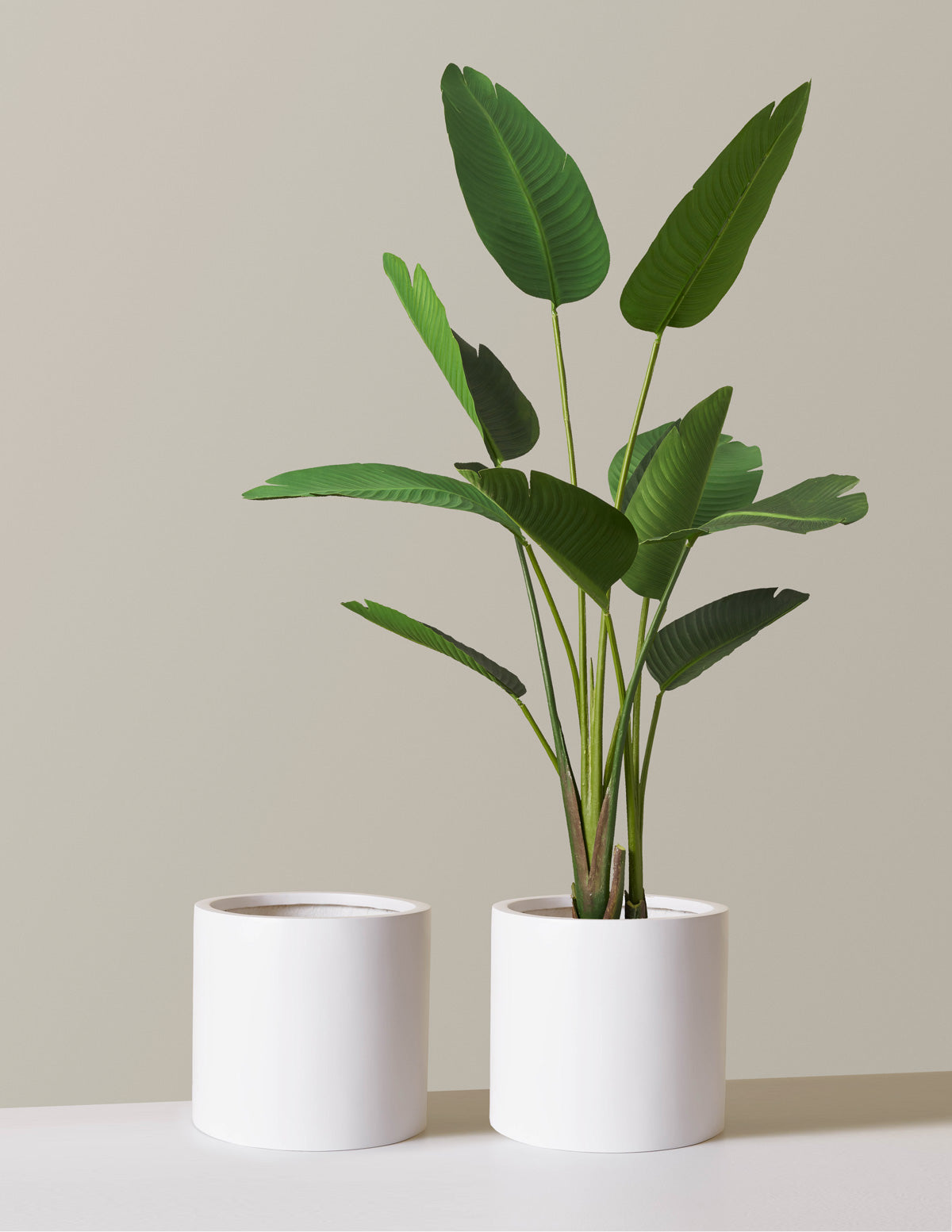 The sill burbank planter variant white