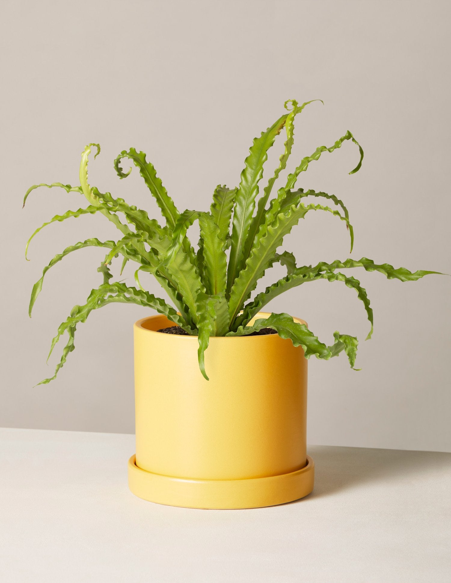 Indoor Potted Plants Delivered to Your Door – The Sill on attractions near me, beauty salon near me, fishing near me, swimming pool near me, gardens near me, factories near me, sauna near me, beach near me, malls near me, lounges near me,