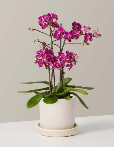 Purple Orchid Shop Mother's Day Gifts