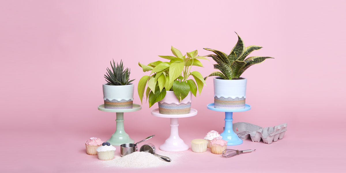 The Sill - Indoor Plants for New York City and Nationwide