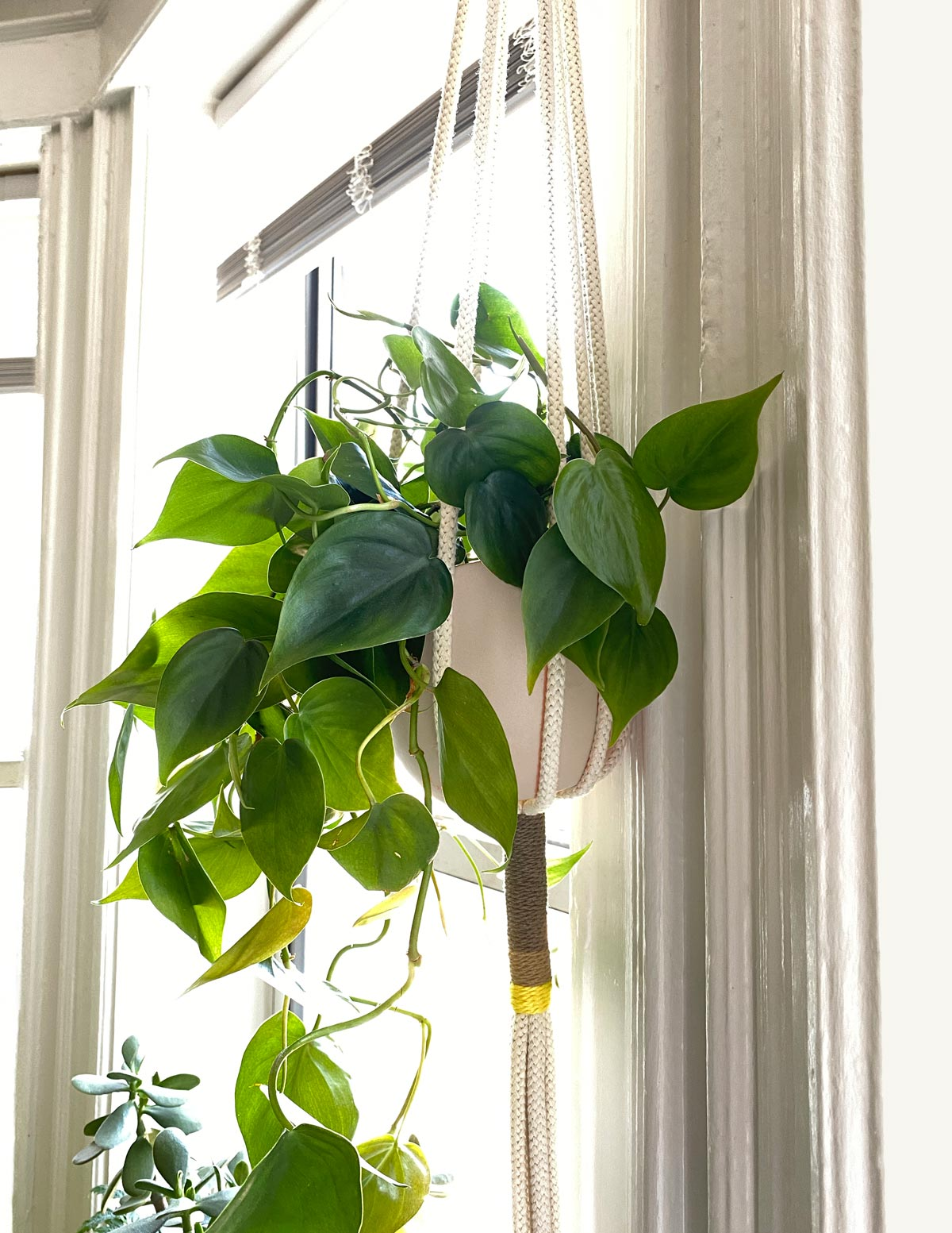 Block Macrame Plant Hanger in Window