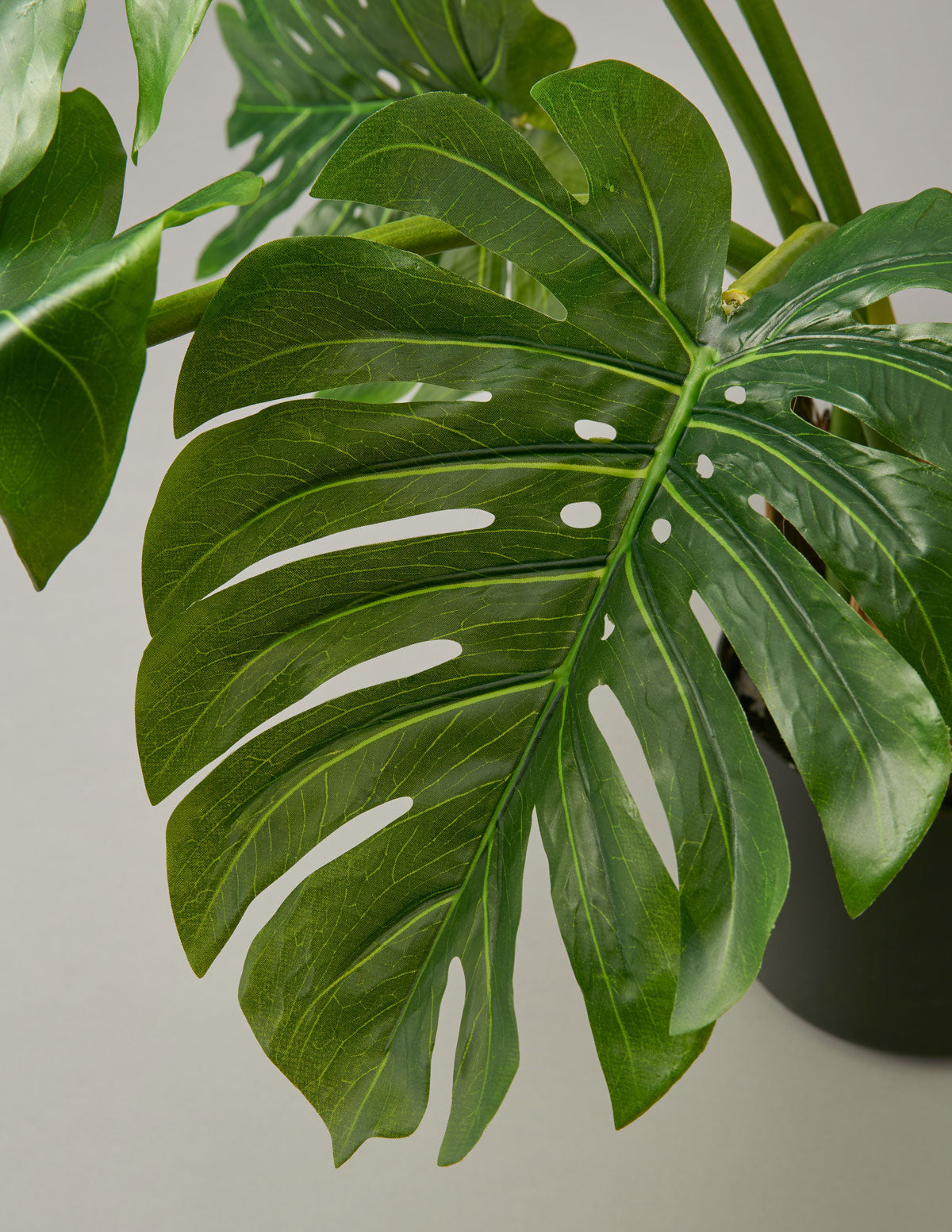 Faux Monstera