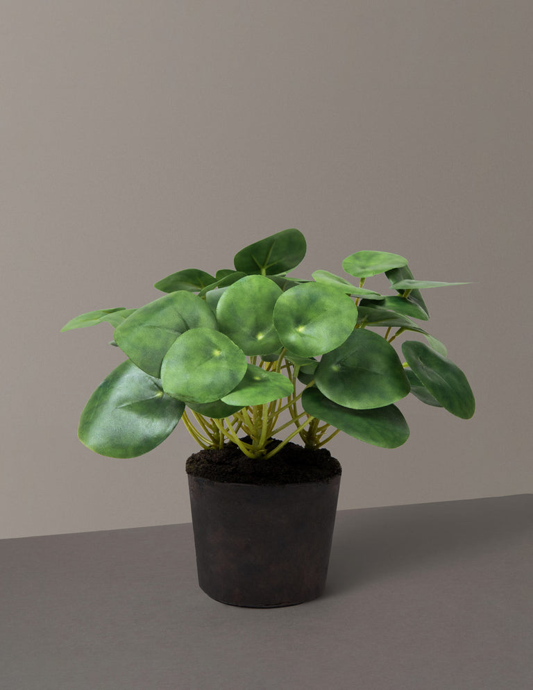 Faux Pilea Peperomioides