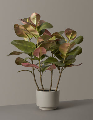 Faux Rubber Tree