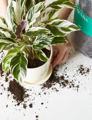 Free Potting: Online Workshop - on October 14th at 6:30 PM EST