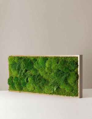 "Preserved Large Living Wall, 40"" x 18"""