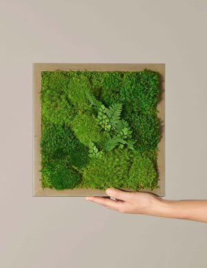Mini Preserved Living Wall