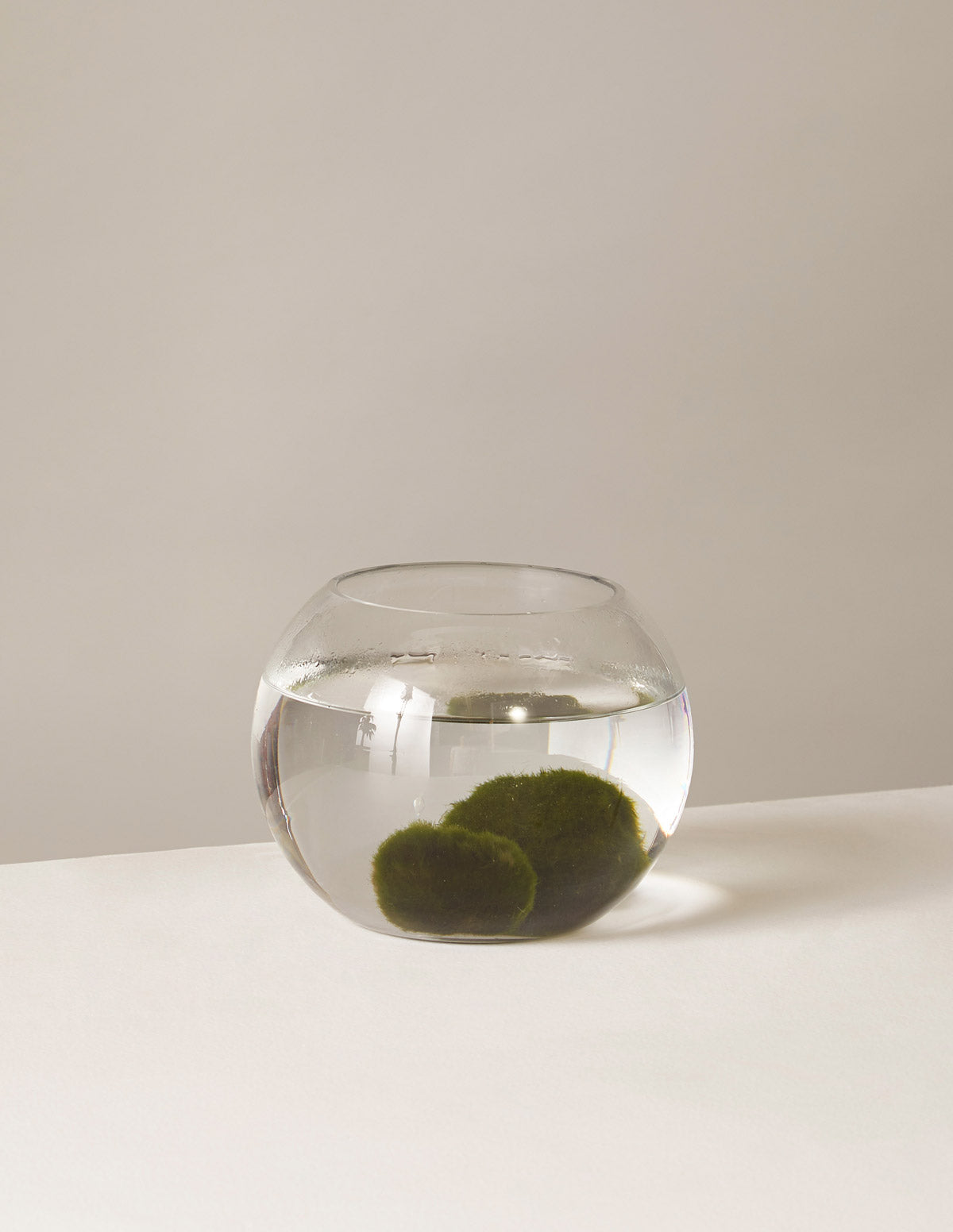 Marimo Moss Ball Kit