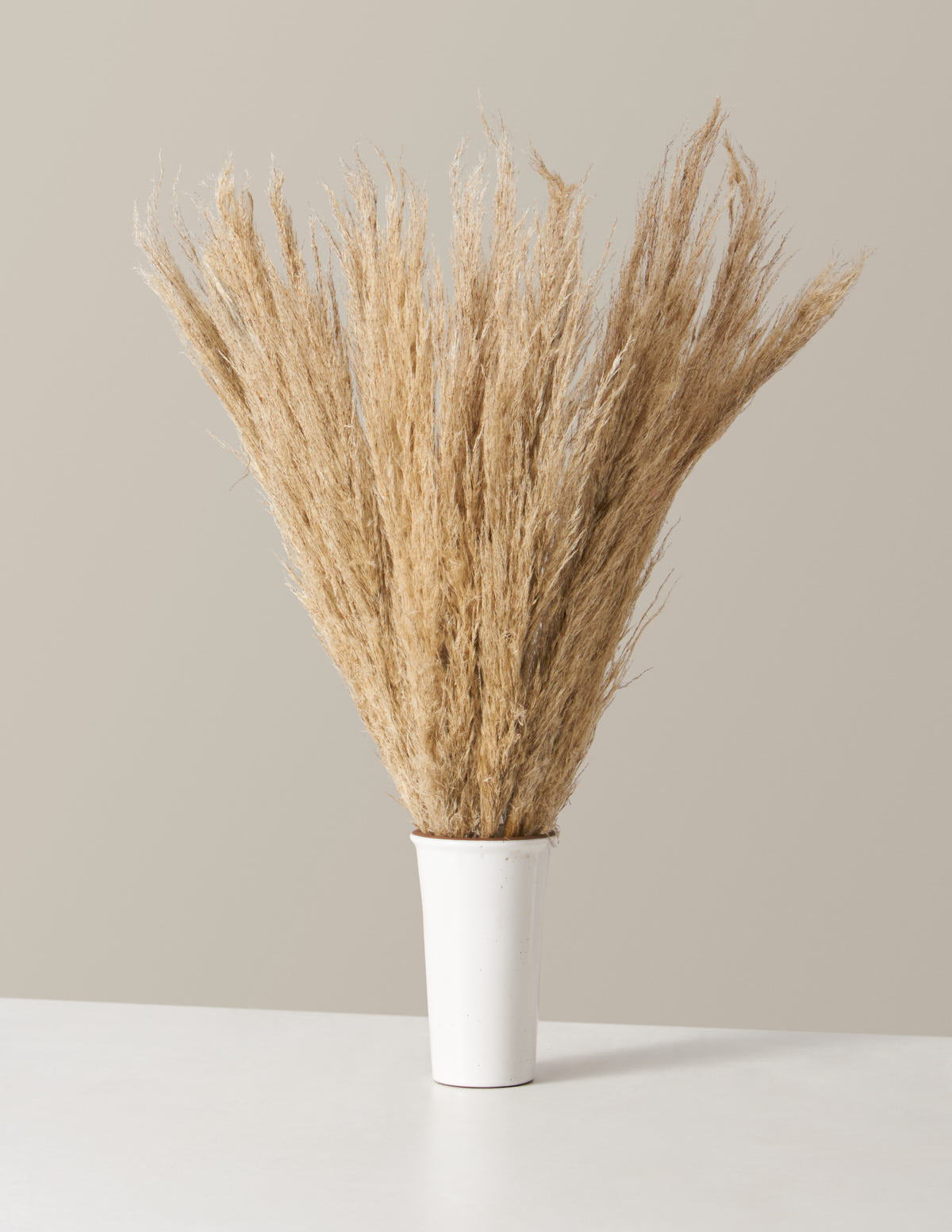 Dried Pampas Stems