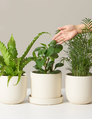 Pet Friendly Plant Subscription