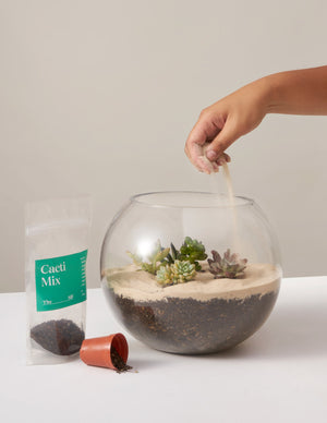 Terrarium Building: Online Workshop - on March 17th at 6:30 PM EST