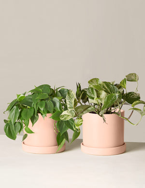 Trailing Plant Duo